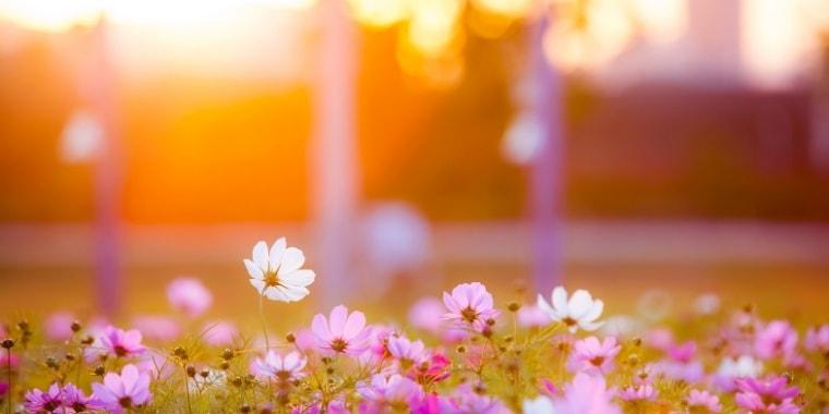 暖かい光と花の風景